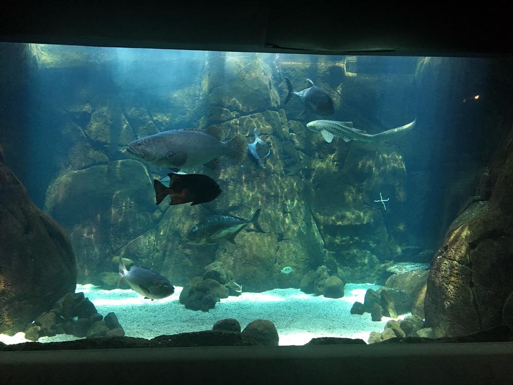 ワイキキ水族館 大物水槽