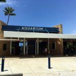 滞在35日目 ワイキキ水族館とベアフットビーチカフェ