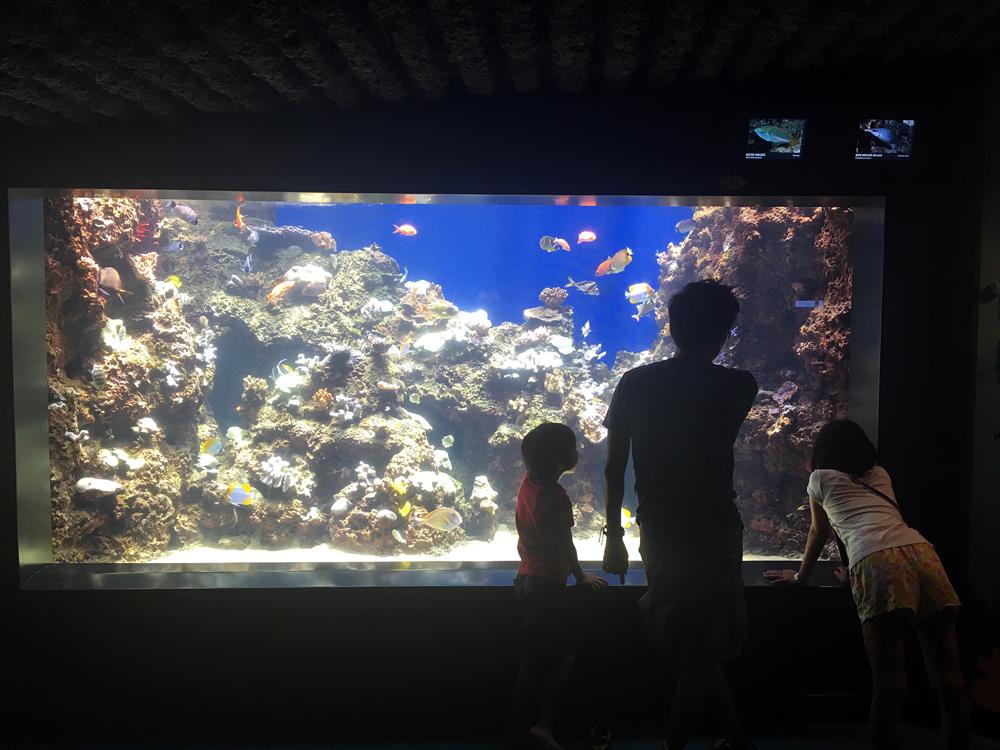 ワイキキ水族館 館内