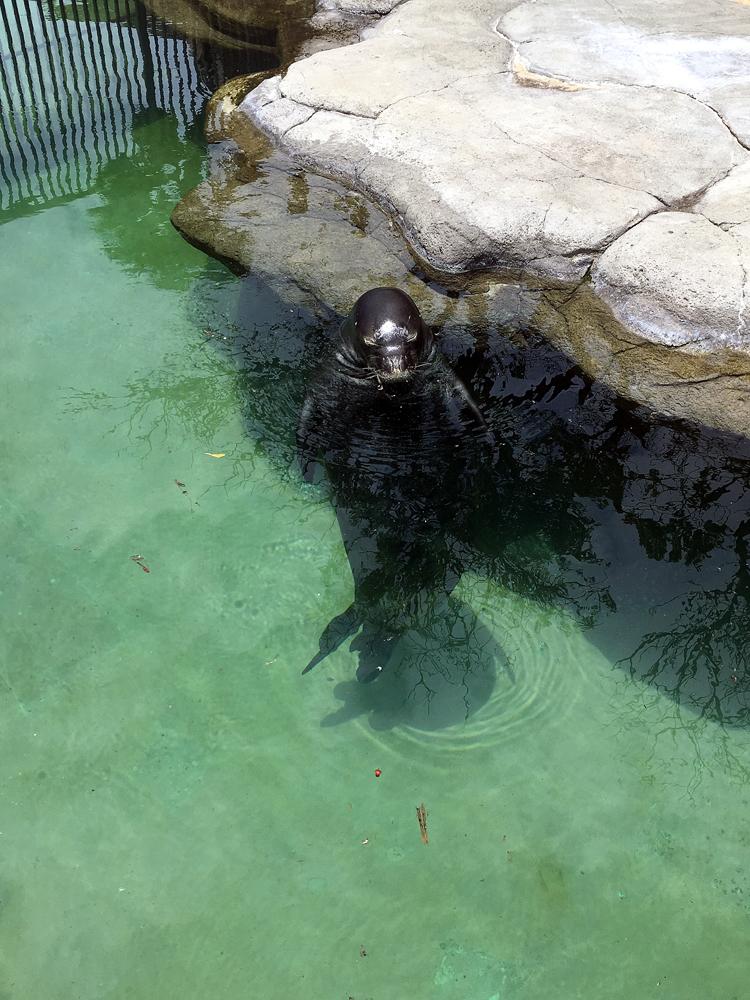 ワイキキ水族館 アザラシ