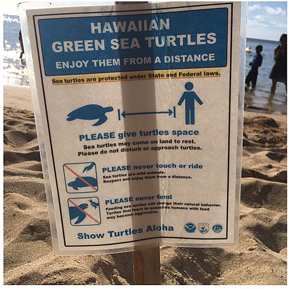 ラニアケアビーチのカメ注意看板